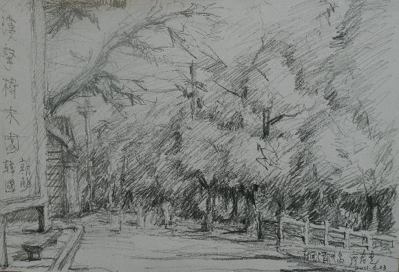 速写树木的画法
